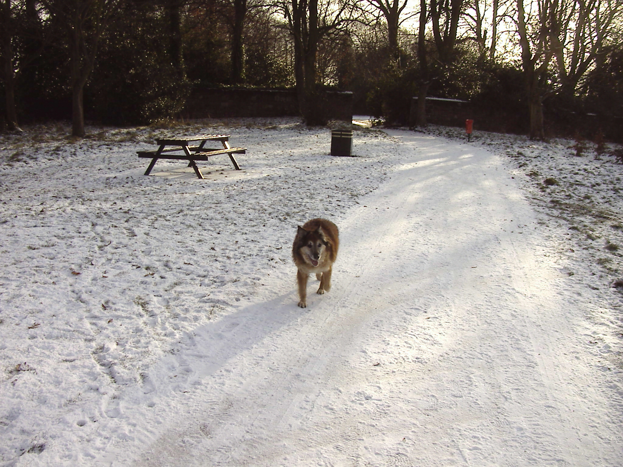 Max on Woolton Woods - Camp Hill 1/12/2010 at 12.44pm