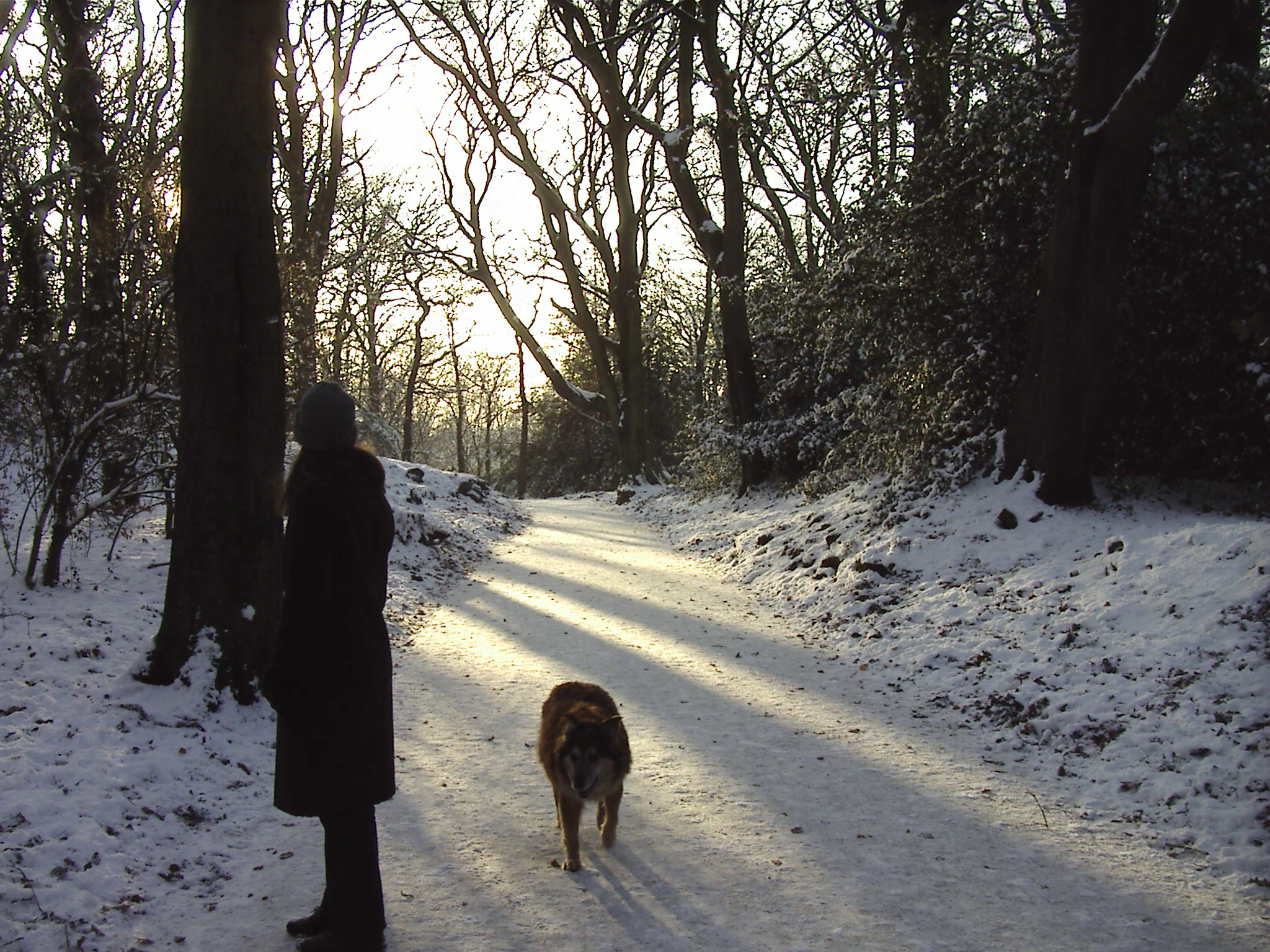 Max and Avenue of Snow - Woolton Woods 19th December 2010