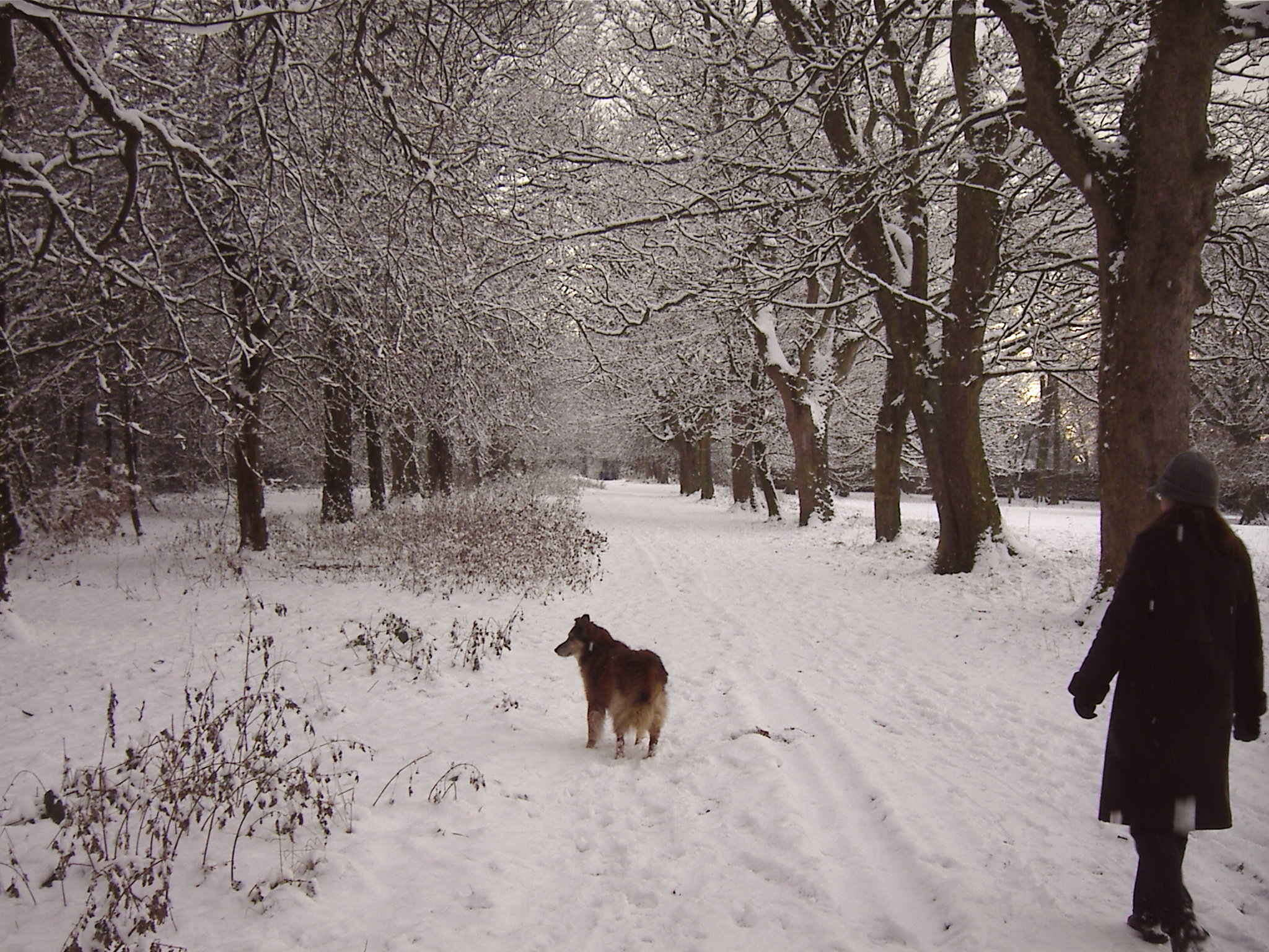 Max and Avenue of Snow 2 - Clarks Gardens Woolton 18th December 2010